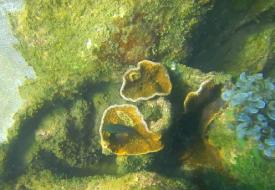 scuba-diving-sample-video-goa-grande-bat-island-card-img-4