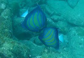 scuba-diving-sample-video-goa-grande-bat-island-card-img-3