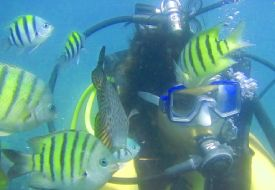 scuba-diving-sample-video-goa-grande-bat-island-card-img-7