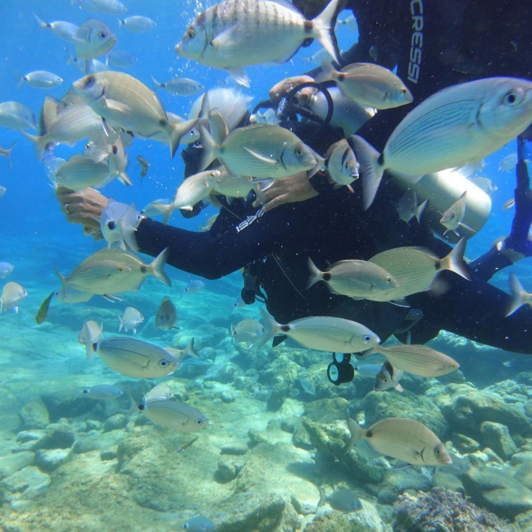 Scuba Diving - Activities - Things to do in Goa